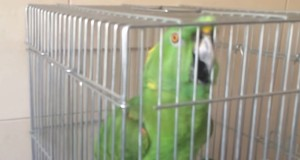 zakiworld-quran-parrot
